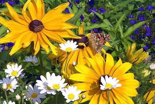Blume mit Schmetterling und Biene