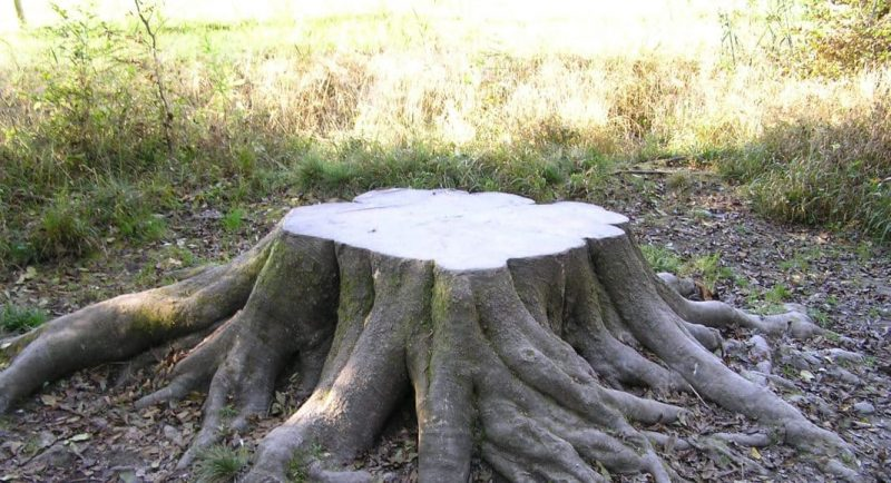 Baumstumpf (Beispielbild) © Uwe Göpfert [CC BY-SA 3.0], via wikimedia commons