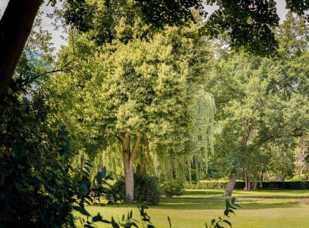 Grün am Feldmarkfriedhof